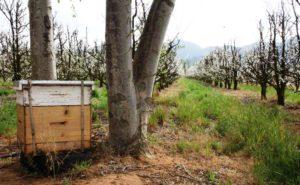 Beehive2