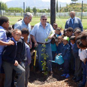 Ipa Prune Tree Donation